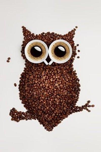 220-219-Nadpochechniki-nenavidjat-sahar-i-kofein